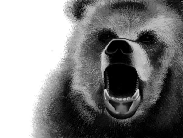 Bear (animal collection_