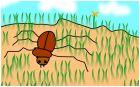 Жук в траве